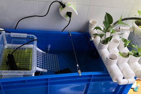 沼泽龟缸升级记
