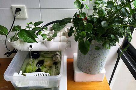 沼泽过滤再升级:植物水道助力水质净化
