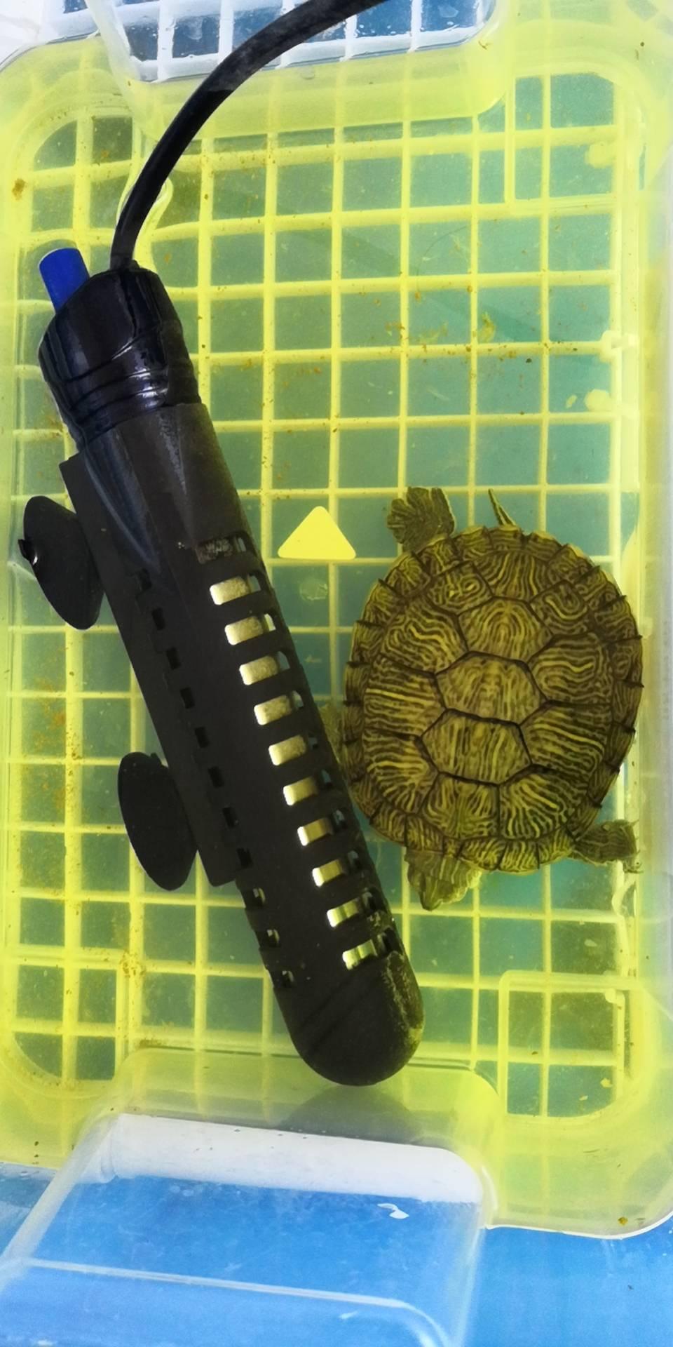 jerrycoding 沼泽龟缸升级记